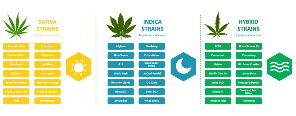 The Best Flower Strains (Sativa, Indica and Hybrid)